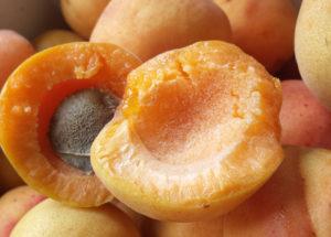 moorpark-apricot-half